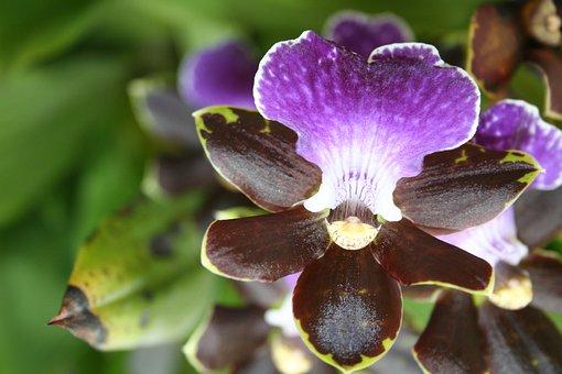 Flower, Flowers, Flora, Nature, Beauty, Beautiful