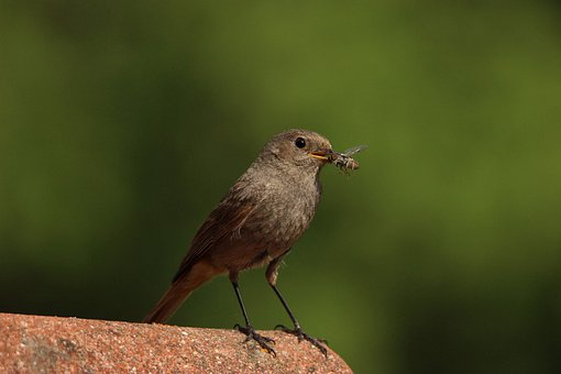 Bird, Food, Insect, Catch, Nature, Bill, Hunger