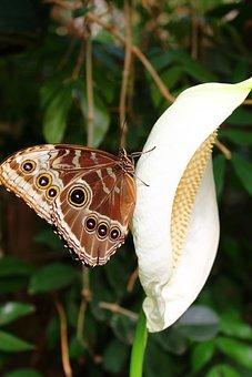 Butterfly, Flower, Garden, Brown, White, White Flower