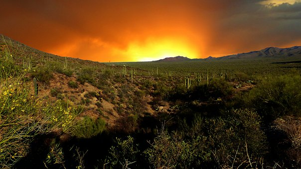 Sunset, Nature Park, Landscape, Cactus, Saguaro