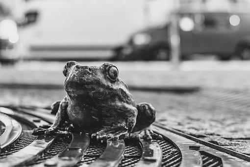 Frog, Brno Czech Republic, City, Square, Market, Street