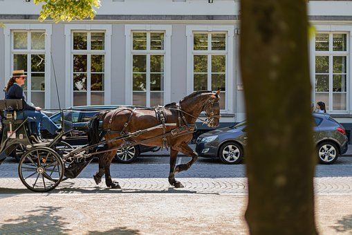Coach, Horse, Horse-drawn Carriage, Wagon, Transport