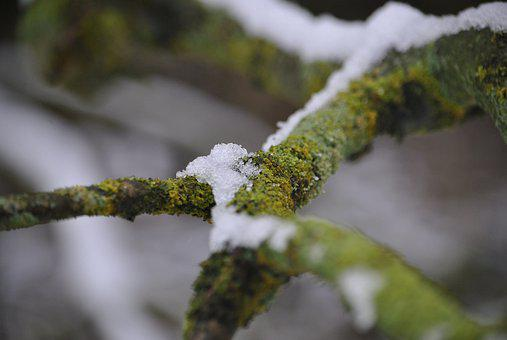 Ice, Winter, Cold, Branch, Nature, Frost, Frozen