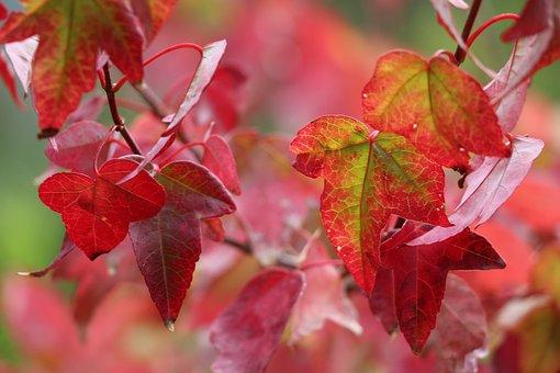 Autumn, Leaves, Colorful, Nature, Seasonal