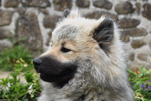 Dog, Puppy, Pup, Portrait Dog Profile