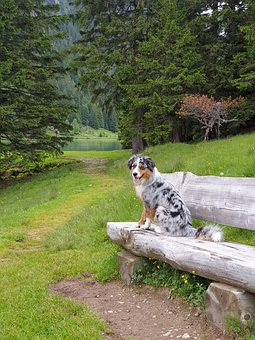 Dog, Wilderness, Swiss Alps, Green, Tree, Outdoor