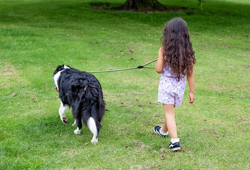 Child With Dog, Child, Dog Walking, Child Dog Walking