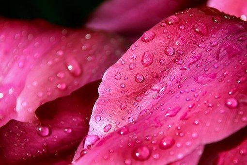 Flower, Leaf Macro, Dew, Drip, Nature, Plant, Blossom