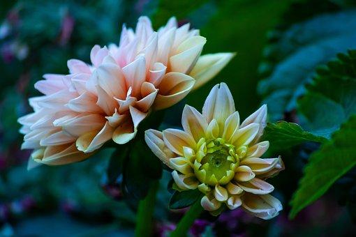 Flowers, Blossom, Plant, Spring, Decorative, Flora