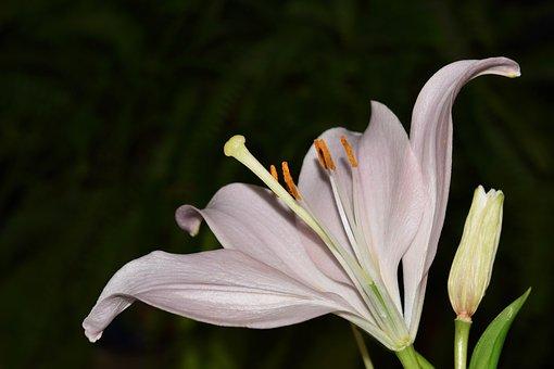 Flower, Fleur De Lis, Pistil, Stamen, Button Flower