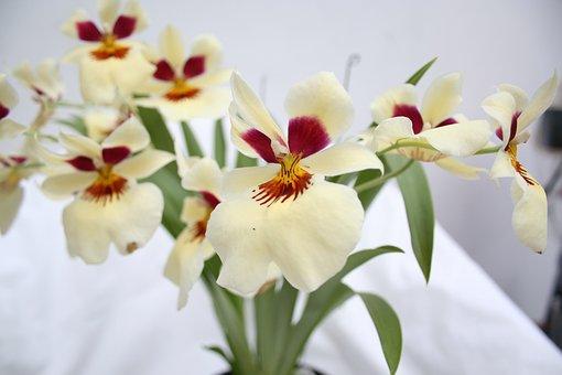 Flower, Flowers, Orchid, Plant, Beauty, Beautiful