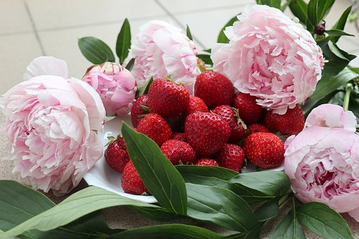 Flowers, Peonies, Fruit, Strawberries, The Smell Of