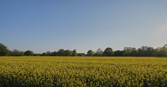 Flowers, Field, Flower Field, Yellow Flowers