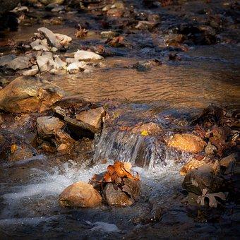 River, Creek, Water, Landscape, Nature, Stream, Forest