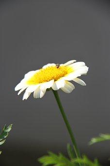Flower, Calendula, Marigold, Orange, Gardening, Plant