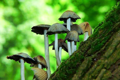 Mushrooms, Hats, Drzon Mushroom, Vegetation, Forest