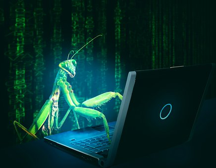Bug, Virus, Computer, Hack, Hacking, Infect, Internet