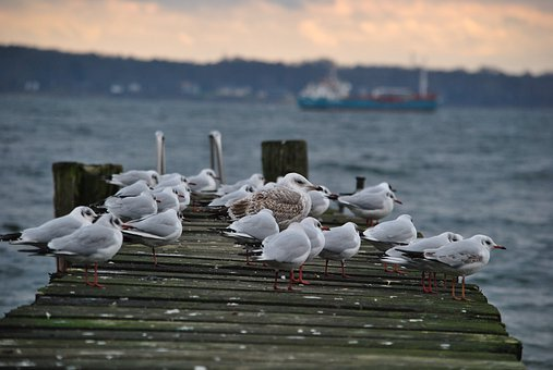 Web, Seagull, Water, Sea, Bird, Sky, Lake, Baltic Sea