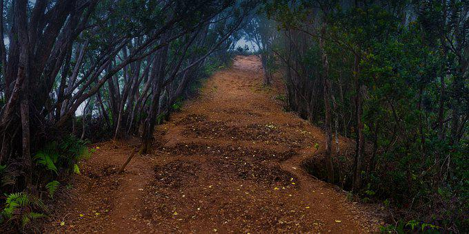 Spooky Path, Eerie, Mysterious, Shadow, Woods, Forest