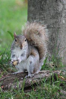 Squirrel, Animal, Eating, Nature, Cute, Small, Mammal