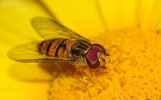 Yellow, Flower, Nature, Orange