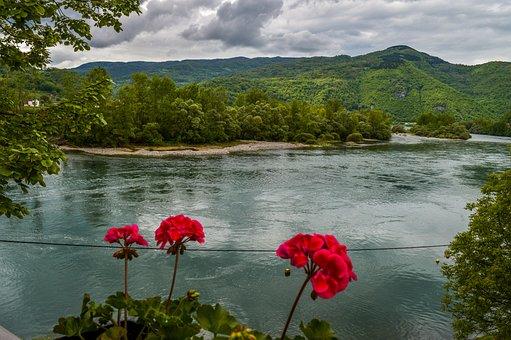 Serbia, Drina, River, Flowers, View, Nature, Tara