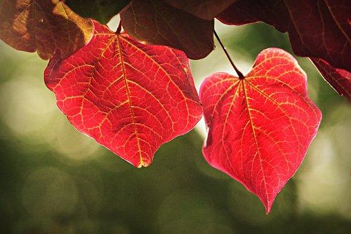 Leaf, Foliage, Vein, Pattern, Nature, Tree, Branch