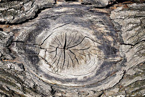 Wood, Tree, Nature, Log, Tribe, Structure, Old, Pattern