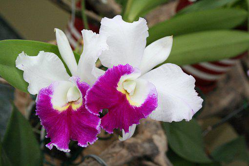 Flower, Orchid, Plant, Flowers, Exotic, Botany