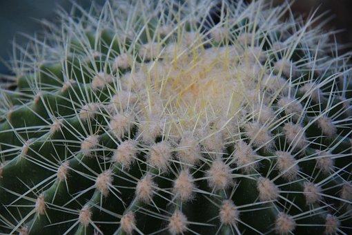Cactus, Sharp, Succulent, Desert, Green, Nature, Plant