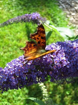 Butterfly, Insect, Nature, Spring, Nectar, Pollen