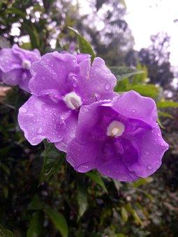 Flower, Lilac, Purple, Sprinkled, Nature, Flowering