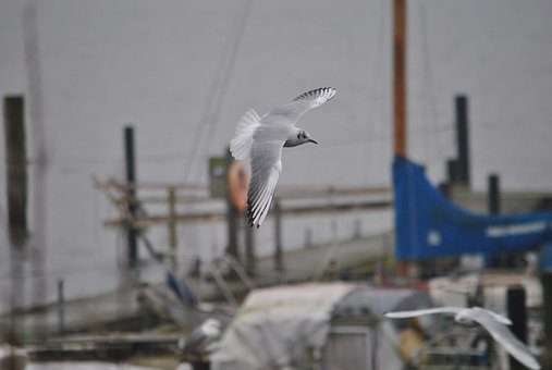 Seagull, Bird, Wing, Sea, Flying, Nature, Escape, Sky