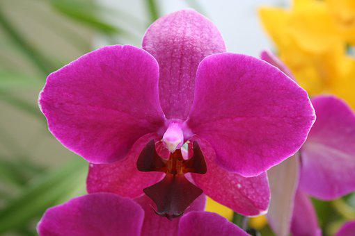Flower, Flowers, Orchid, Beautiful, Spring, Summer