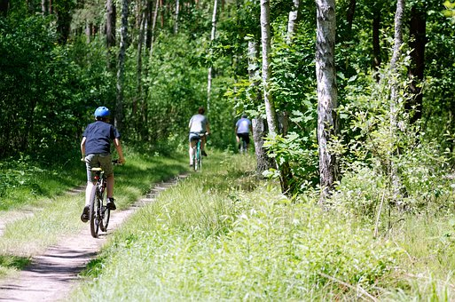 Forest, Vegetation, Green, Landscape, Trees, Cyclists