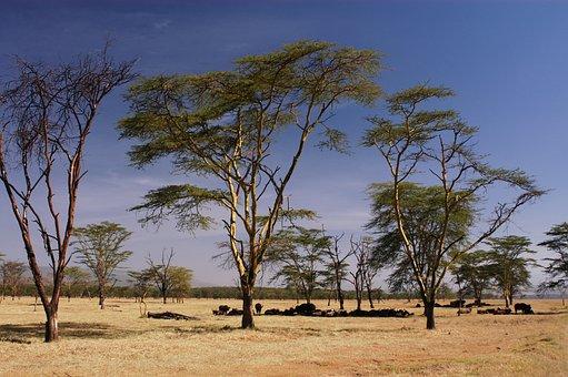 Africa, Kenya, Safari, Nature, Wildlife, Wild, Animal