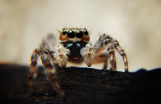 Spider, Macro Photography, Web, Tarantula, Arachnid