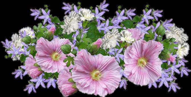 Flowers, Hollyhocks, Carnations, Arrangement, Garden
