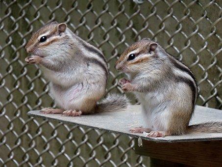 Animal, Squirrel, Chipmunk, Cute, Diet, Park, Travel