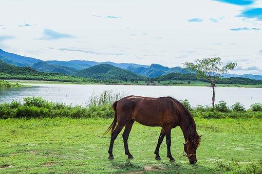 Horse, Mountains, Nature, The Landscape, Sky, Cloud