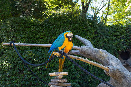 Parrot, Color, Colorful, Plumage, Nature, Exotic, Macaw