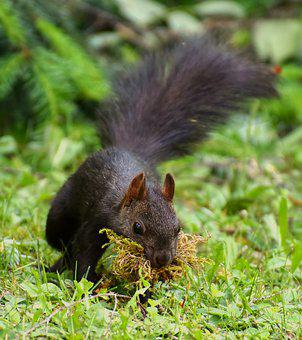 Squirrel, Nest Building, Moss, Nager, Cute, Sweet