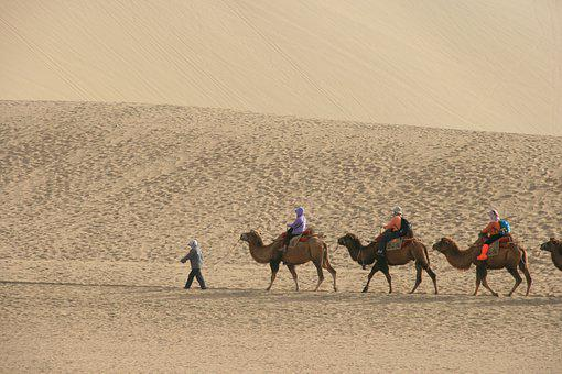 Desert, Camel, Tourism