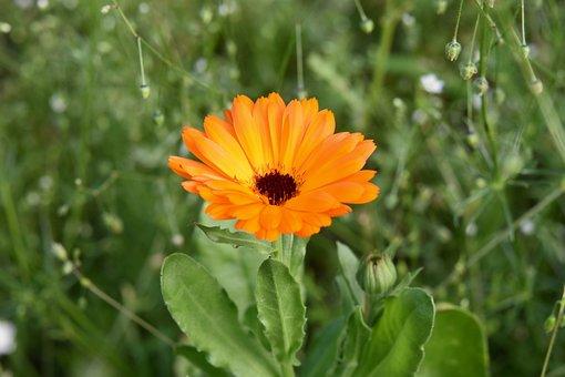 Flower, Flower Petals, Petals Orange, Stamens