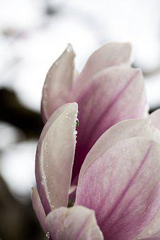 Flowers, Nature, Flower, Summer, Spring, Yellow, Garden