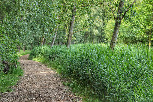 Trees, Forests, Forest Path, Summer, Nature, Green
