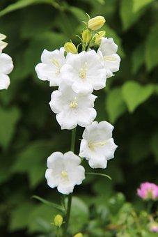 White Flowers, Nature, Flowering, Summer, Fulfillment