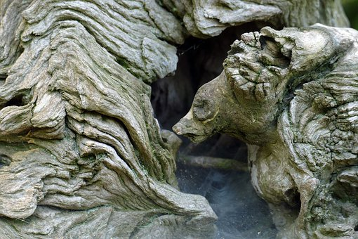 Bear, Head, Fantasy, Perception, Imagination, Wood
