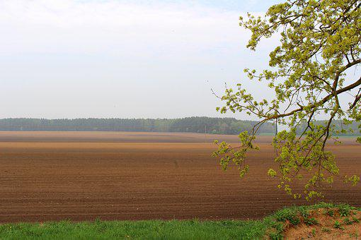 Landscape, Nature, Field, Forest, Tree, Spring
