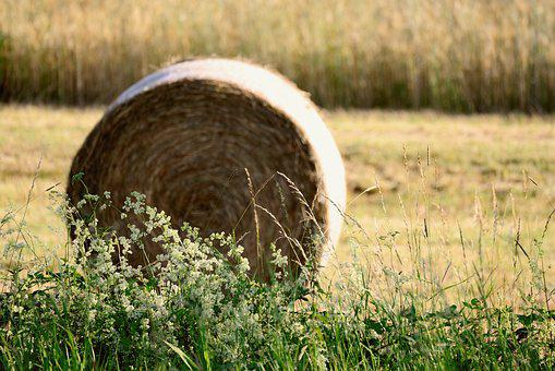 Hay Bales, Field, Agriculture, Hay, Harvest, Landscape